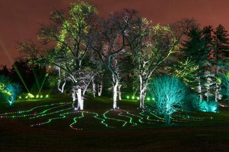 illumination_symphony_woods-morton-arboretum