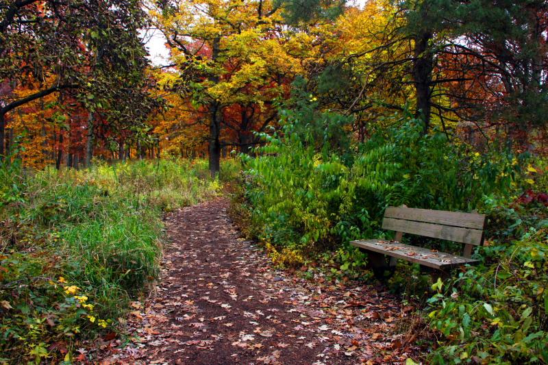 morton arboretum park bench